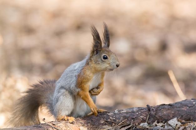 Esquilo em uma árvore Foto Premium