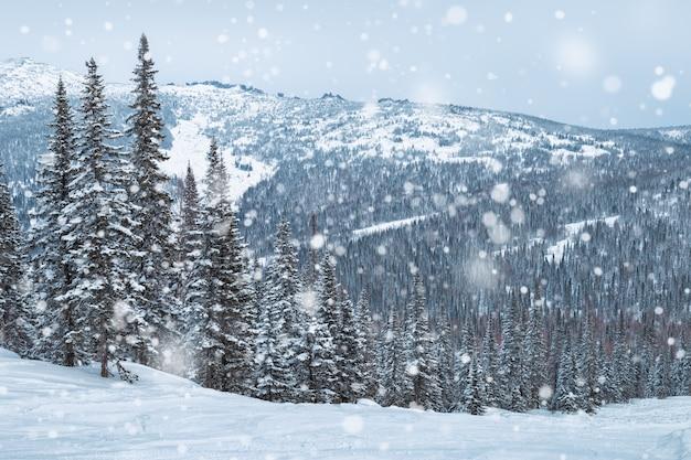 Está nevando na floresta. ski resort sheregesh, bela vista. Foto Premium
