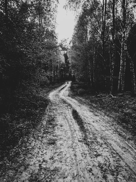 Estrada da floresta enlameada, rodeada por árvores altas em preto e branco Foto gratuita