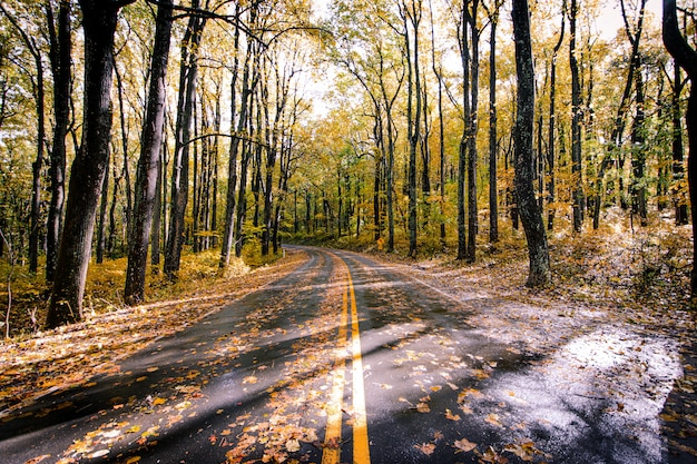 Estrada de asfalto coberta com folhas caídas em uma bela floresta de árvores Foto gratuita