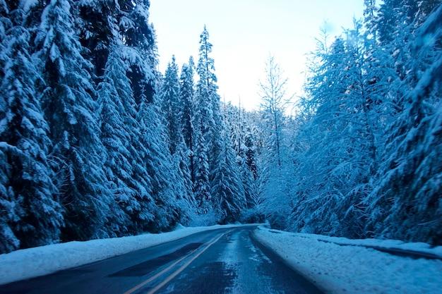 Estrada de montanha coberta de neve no monte. parque nacional rainier Foto Premium