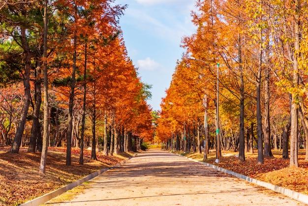 Estrada de outono no parque Foto Premium