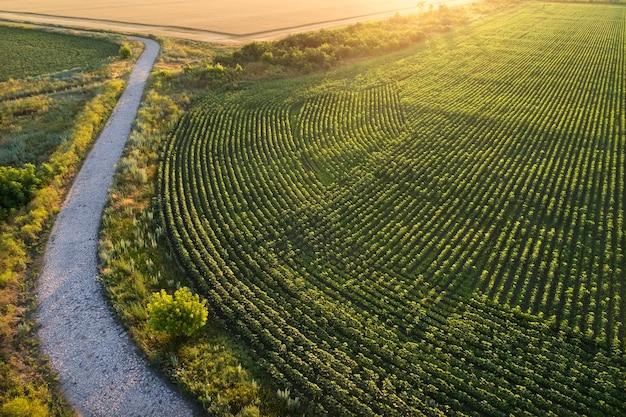Estrada de pedra velha perto da plantação e campos. campo durante o nascer do sol Foto Premium