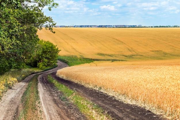 Estrada de terra com árvores verdes na beira da estrada, perto do campo de trigo Foto Premium