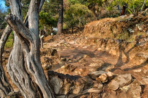 Estrada de terra e rochas com tom quente. tronco de madeira seco em vista frontal. vista linda de verão. tepozteco Foto Premium