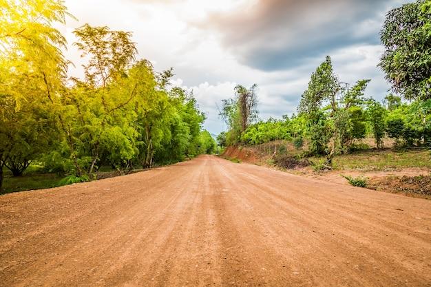 Estrada de terra na floresta Foto gratuita