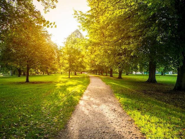 Estrada estreita em um campo gramado cercado por árvores verdes com o sol forte ao fundo Foto gratuita