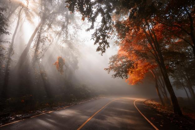 Estrada floresta, com, raios sol, em, outono Foto Premium