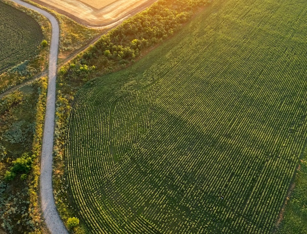 Estrada perto da plantação e campos. campo durante o nascer do sol Foto Premium