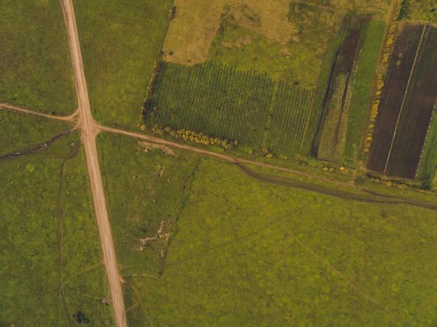 Estrada rural nos campos de trigo Foto Premium