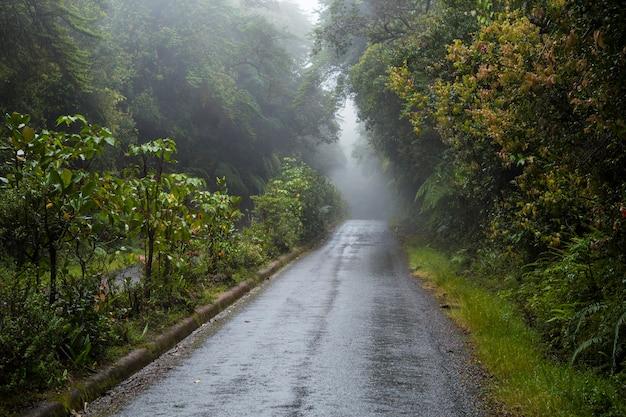 Estrada vazia junto com a floresta tropical na costa rica Foto gratuita