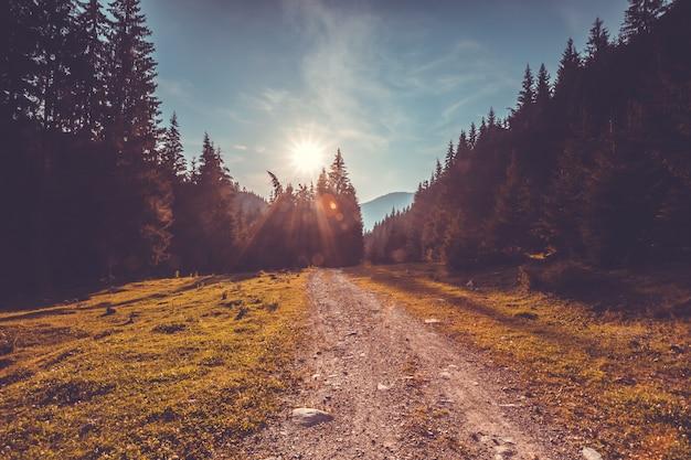 Estrada vazia na floresta de pinheiros. paisagem da natureza Foto Premium