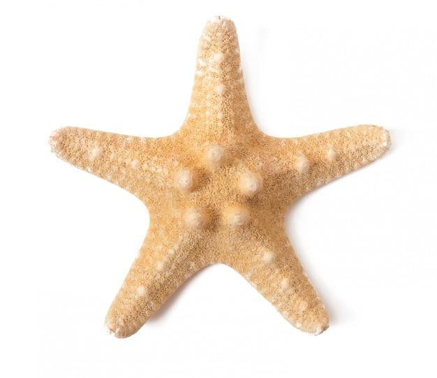 Estrela do mar isolada Foto gratuita