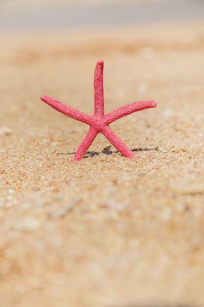Estrela do mar na praia na areia Foto Premium