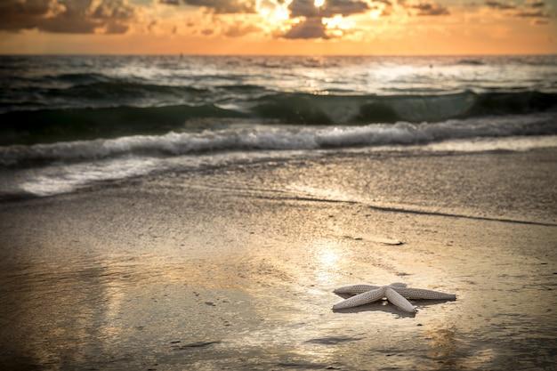 Estrela do mar na praia Foto Premium
