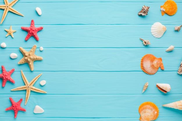Estrela do mar plana leigos e conchas Foto gratuita
