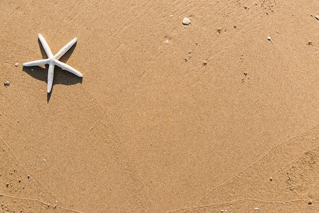 Estrela do mar seca no fundo da praia Foto gratuita