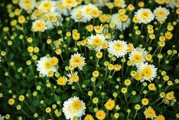 Estufa com flores desabrochando coloridas. Foto Premium
