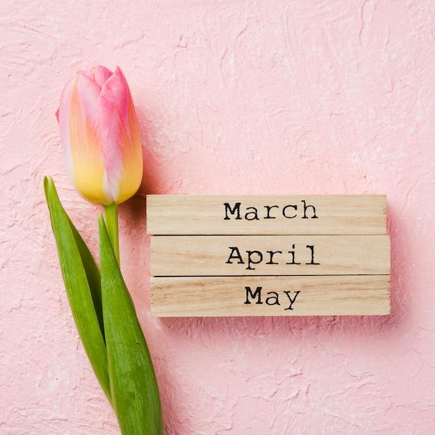 Etiqueta de meses de primavera ao lado de tulipa Foto gratuita