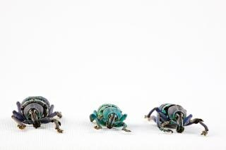 Eupholus besouro trio branco Foto gratuita