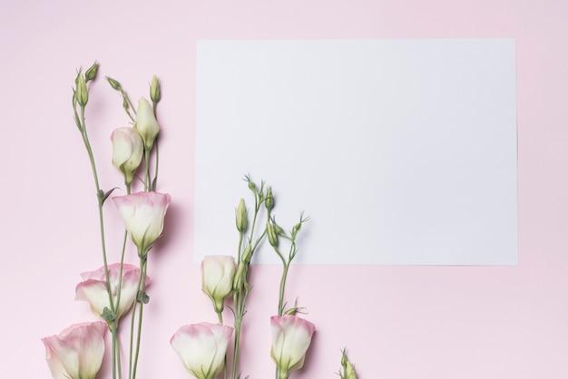 Eustoma fresco galhos de flores com papel em branco contra fundo rosa Foto gratuita