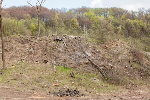 Exploração da silvicultura do pinheiro em um dia ensolarado. tocos e toras mostram que a superexploração leva a um ambiente de risco de desmatamento e sustentabilidade Foto Premium