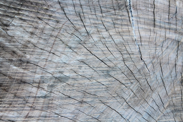 Extremidades do log de textura de madeira Foto Premium