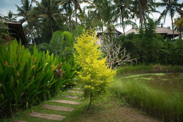 Exuberante jardim tropical Foto gratuita