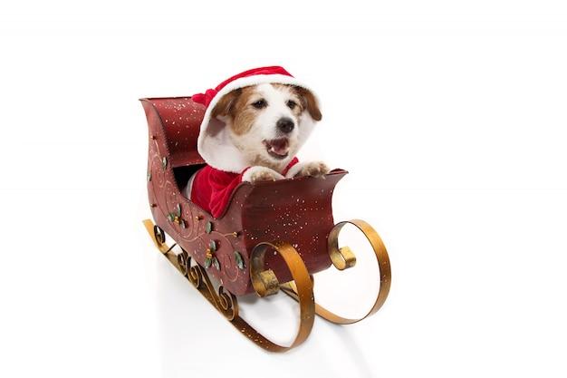 Fantasia de cachorro papai noel dentro de um trenó no natal Foto Premium