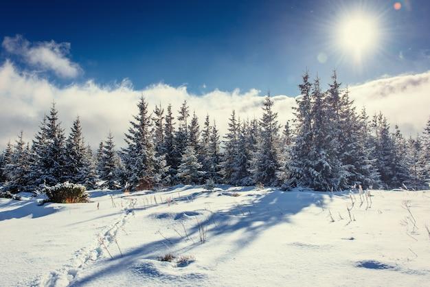 Fantástica paisagem de inverno e trilhas pisadas que levam Foto Premium
