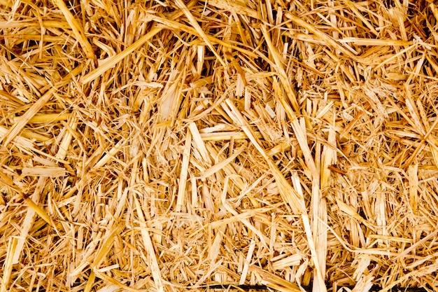 Fardo dourado palha textura ruminantes comida de animais Foto Premium