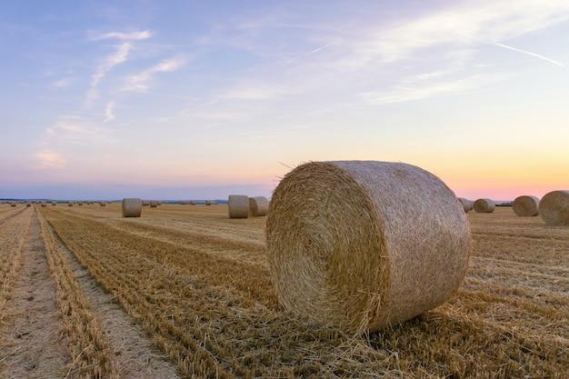 Fardos de palha empilhados em um campo no horário de verão, reims, frança Foto Premium