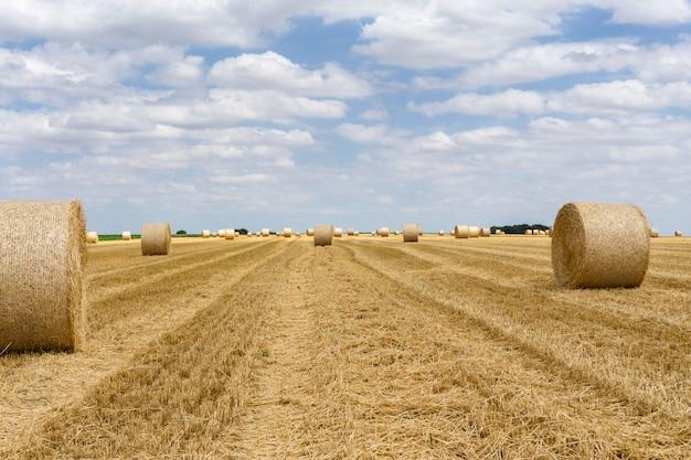 Fardos de palha empilhados em um campo no horário de verão Foto Premium