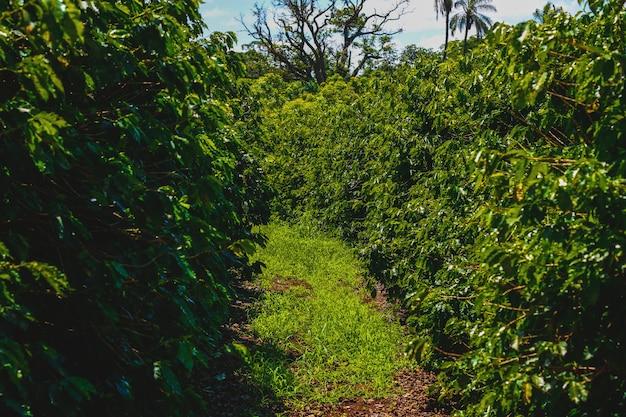 Farme da indústria cafeeira Foto Premium