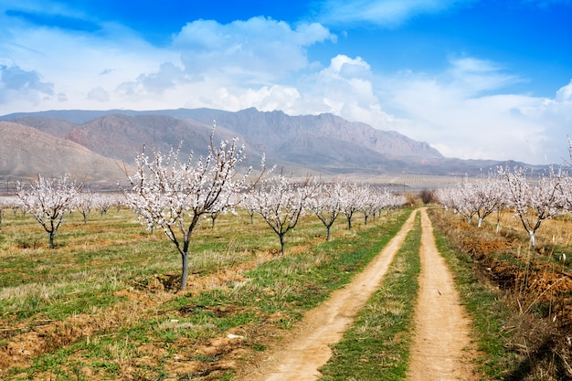 Fazenda de damasco durante a temporada de sping contra a cordilheira de vayk, província de vayots dzor Foto Premium