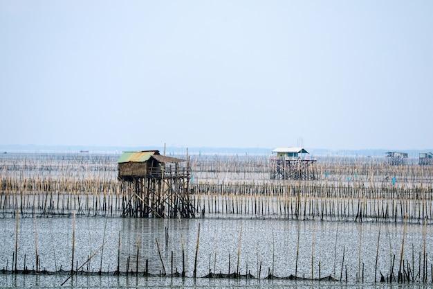 Fazenda de mexilhão no mar ao longo da floresta de mangue Foto Premium