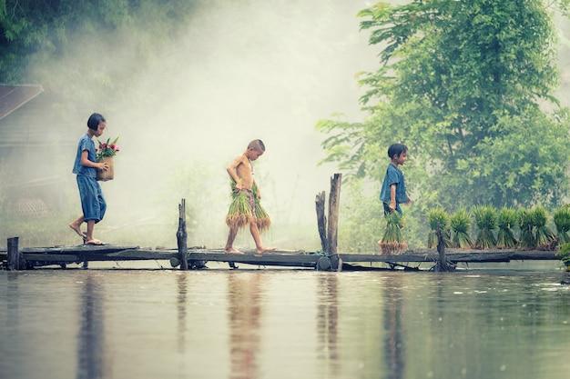 Fazendeiro asiático das crianças no arroz cruze a ponte de madeira antes do crescido no campo de almofada. Foto Premium