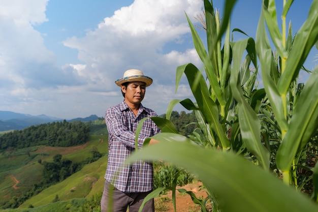 Fazendeiro asiático que verifica plantas em sua fazenda no campo de milho sob o céu azul no verão Foto Premium