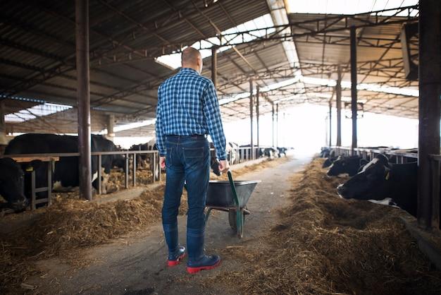 Fazendeiro com carrinho de mão cheio de feno alimentando vacas em fazenda de gado doméstico Foto gratuita