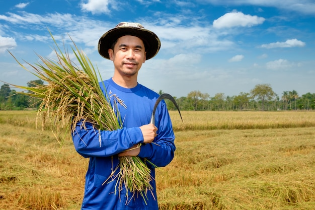 Fazendeiro feliz colheita paddy no campo de arroz tailândia Foto Premium