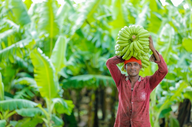 Fazendeiro indiano no campo de banana Foto Premium