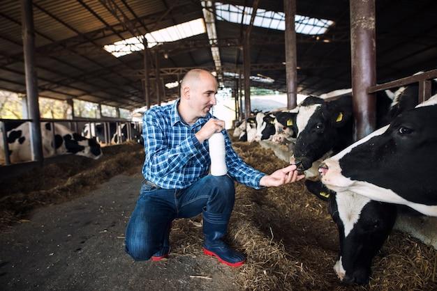 Fazendeiro na fazenda da vaca segurando uma garrafa de leite fresco enquanto as vacas comem feno no fundo Foto gratuita