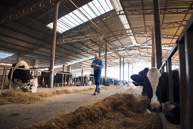 Fazendeiro pecuarista caminhando pela fazenda de animais domésticos com tablet e observando vacas Foto gratuita