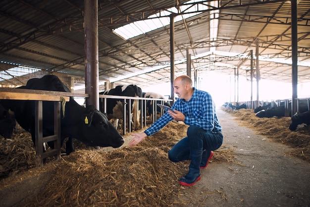 Fazendeiro pecuarista com tablet cuidando de vacas na fazenda Foto gratuita