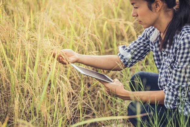 Fazendeiro que está em um campo do arroz com uma tabuleta. Foto gratuita