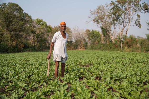 Fazendeiro que trabalha no campo de beterrabas, uma cena de agricultura rural indiana. Foto Premium