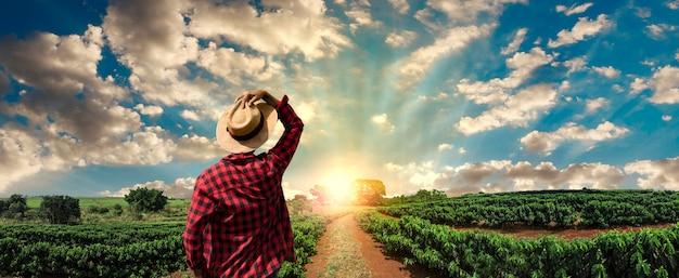 Fazendeiro trabalhando no campo de café ao pôr do sol ao ar livre Foto Premium