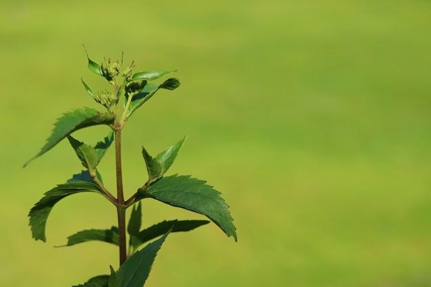 Fechado, jovem, árvore, folhas, em, a, luz solar, com, turvo, vibrante, grama verde, campo, em, fundo Foto Premium
