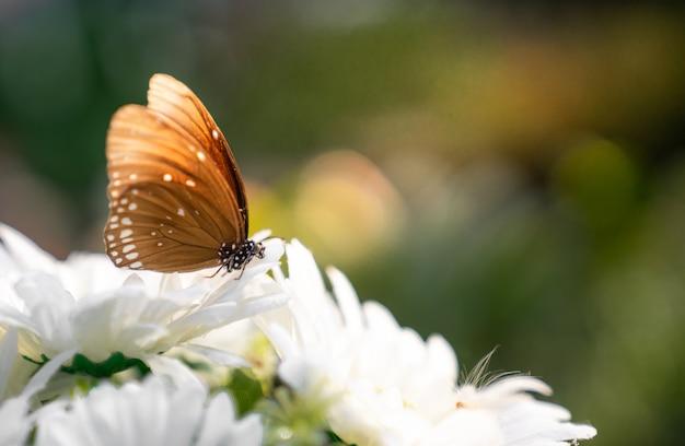 Fechar a borboleta na flor branca com espaço de cópia Foto Premium