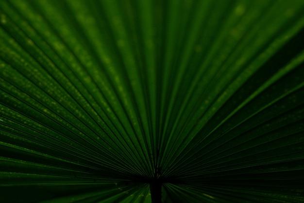 Fechar detalhes de folha de árvore verde na selva Foto Premium
